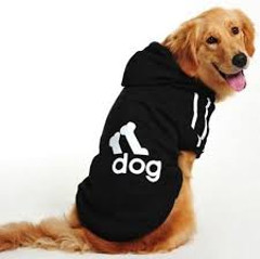 Ako vyberať psie oblečenie