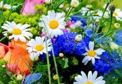 Ako zbierať kvetové bylinky