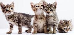 Mačiatka a očkovanie