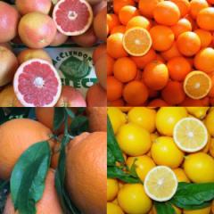 ako pestovat citrusy