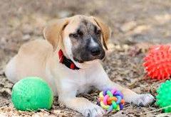 farebné hračky pre psov
