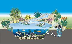 kvalita vody v záhradom jazierku