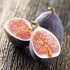 pestovanie figovníku