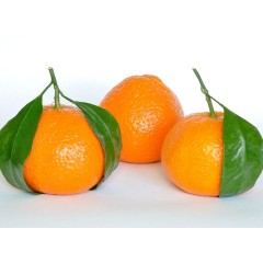 plody mandarinky