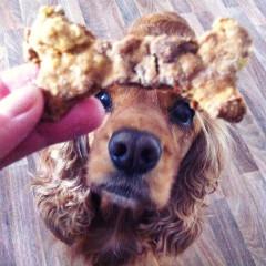 Ako upiecť svojmu miláčikovi psie cukrovinky?