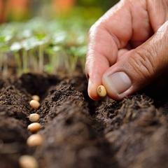 Ako vyberať semená a na čo si dávať pozor?