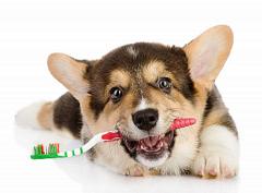 ako správne vyčistiť psovi zuby