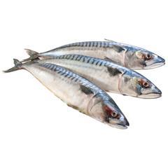 pomazánka z makrely
