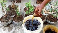 pripravovanie hnojiva doma