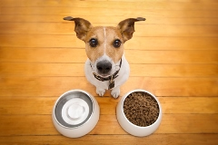 ako spoznať kvalitné krmivo pre psa