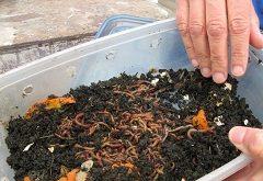 Ako vyrobiť dážďovkový kompostér – vermikompostovanie?