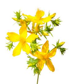 liečba bylinkami a korením fenikel