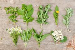 májové bylinky