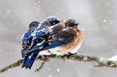 vtáci v zime
