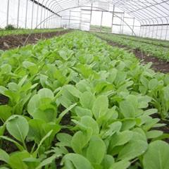 zalievanie zeleniny