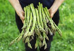 Ako pestovať a spracovať špargľu?