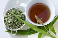 čaj zo skorocelu a ako využiť skorocel