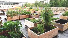 Ako založiť komunitnú záhradu