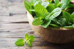 mäta na domáci bylinkový repelent