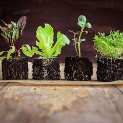 napadnuté rastliny