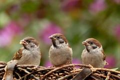 ochrana záhradky proti škodcom