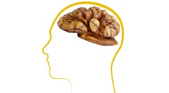 podpora mozgu orechmi
