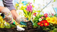 práce na záhrade - presádzanie