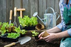 jarné práce na záhrade - presádzanie