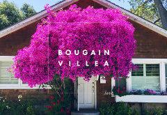 Ako správne pestovať a presádzať kvety bougainvillea?