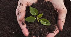 skúste si samy vyrobiť hnojivo