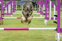 tréning agility