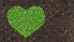 Ako na zelené hnojenie?