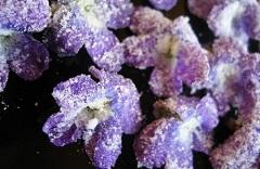 kandizované kvety