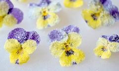 recept na kandizované jedlé kvety