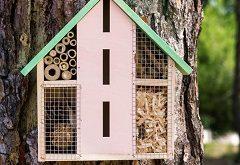 Ako postaviť hmyzí hotel?